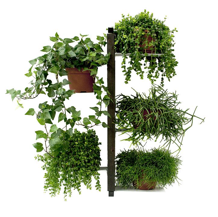 Le zie di milano porte plantes murale zia flora - Porte plante design ...